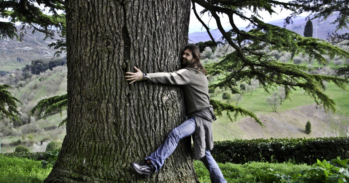 В Финляндии пройдёт чемпионат 'обнимашек' с деревьями