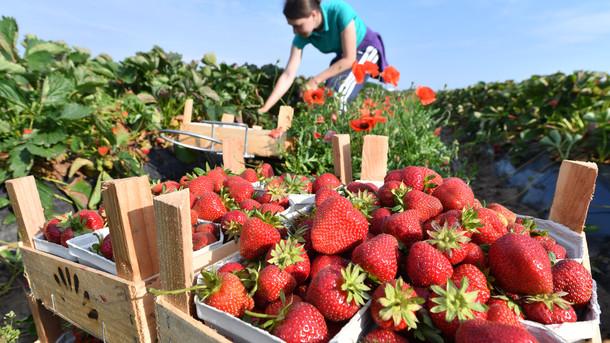 Що відбувається з цінами на ягоди в Україні і коли вони впадуть: експерти дали прогноз, фото-1
