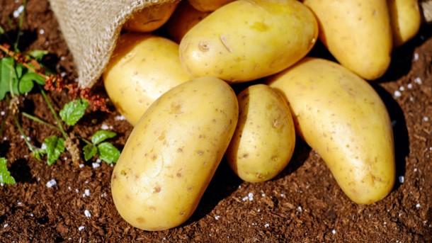 Не сезон для овощей: почему цены не падают и чего ждать к концу лета, фото-1
