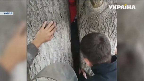 В Харькове семилетняя девочка застряла между деревьями
