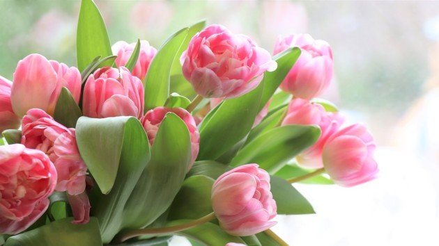 Поздравления с наступающим 8 Марта: красивые стихи и SMS