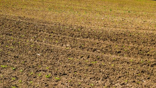 В Украине начали сеять озимый рапс