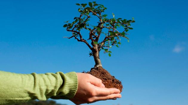 В Киеве пройдут осенние толоки: где посадят новые деревья