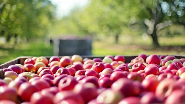 Украина скупает заграничные яблоки: импорт побил рекорд