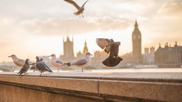 Блэкаут в Великобритании коснулся больше миллиона жителей страны