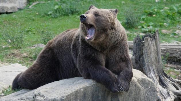 В Японии застрелили медведя наулице города