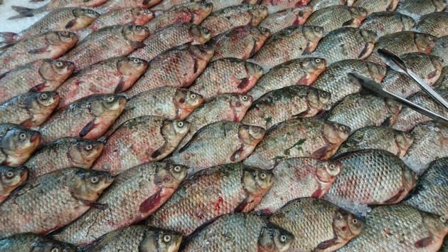 В Украине стали ловить больше рыбы
