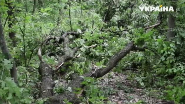 В Донецкой области «черные лесорубы» пытались вывезти три тонны дуба
