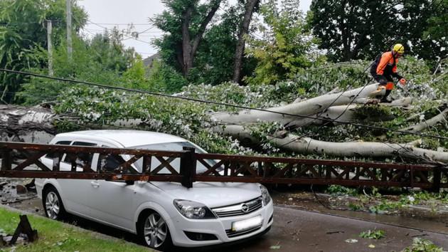 В Николаеве сильный ветер повалил более 30 деревьев