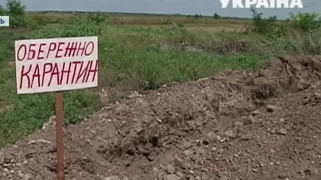 Под Днепром нашли туши свиней, зараженных африканской чумой