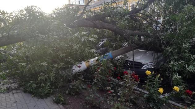 В Днепропетровской области 12-метровое дерево рухнуло на машины: появились фото и видео