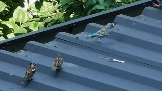 На крыше здания на Русановке заметили маленького попугая