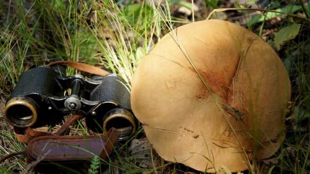 В Чернобыле выросли запрещенные грибы-великаны: фото