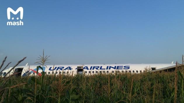 В России пассажирский самолет экстренно сел в кукурузном поле: появилось видео