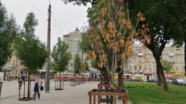 В одном из скверов Подола в центре Киева усохли деревья (фото)