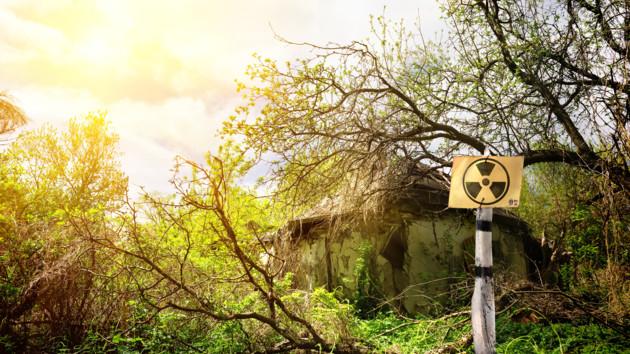 Медведица с крыльями: в Чернобыле нашли необычное существо (фото)