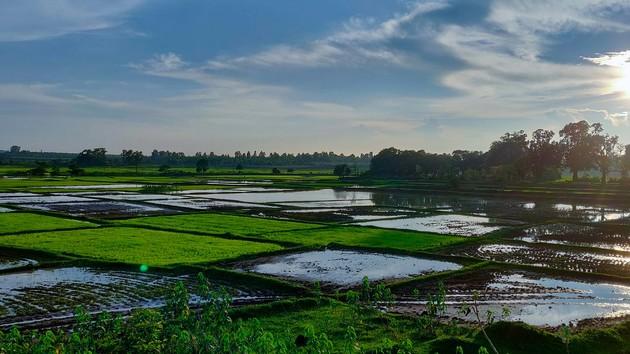 """Украина может стать экспортером риса и """"кормить"""" Азию - Минагропрод"""