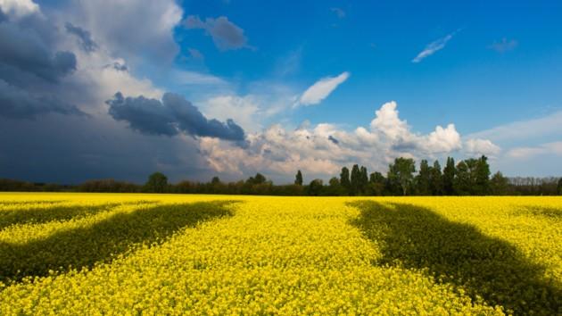 День Независимости Украины 2019: поздравления в стихах, прозе и СМС