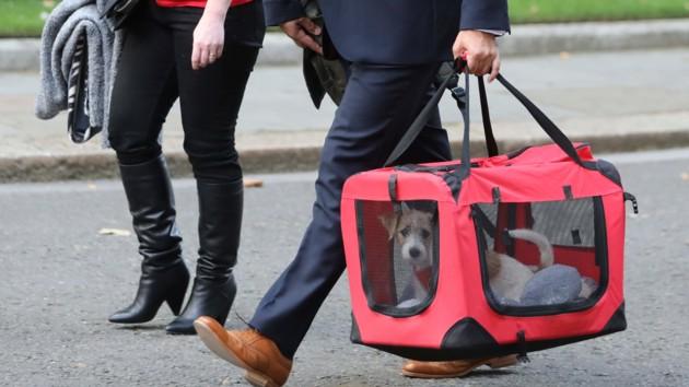 Борис Джонсон спас милого щенка от смерти