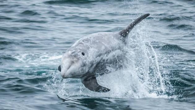 """Дельфин """"поблагодарил"""" рыбаков за спасение потомства: видео"""