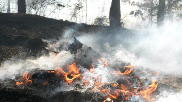 Киев и область охватили массовые крупные пожары: появились подробности, фото и видео