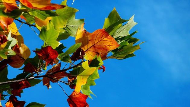 12 сентября: какой сегодня праздник, приметы дня и что нельзя делать