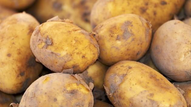 В России 4 человека умерли от отравления газом в погребе с картофелем