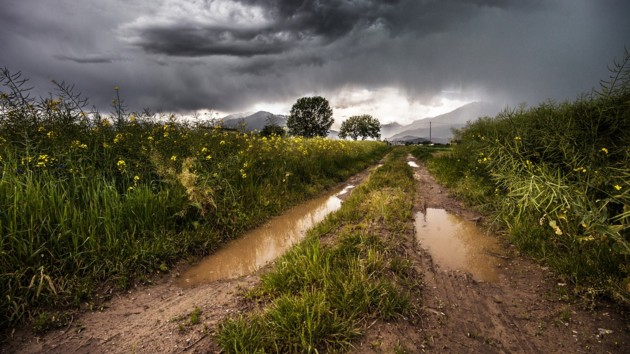 Кочевые дожди и скачки температуры от +14 до +24: какой будет погода в начале недели