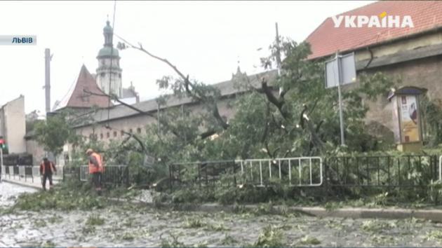 Во Львове упало 100-летнее дерево: центр города сковали пробки