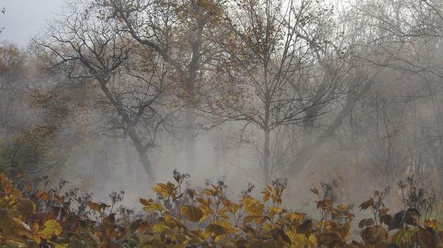 Все оттенки осени: синоптики рассказали о капризах погоды на неделю