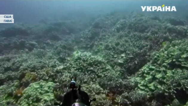 Знаменитые кораллы на Гавайях неожиданно начали терять цвет