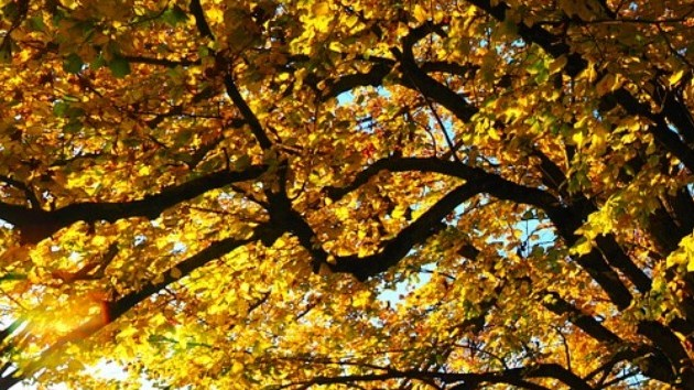 Погода в Украине 16 октября будет одной из самых теплых в Европе