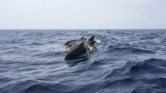В реку под Николаевом заплыл краснокнижный дельфин: видео