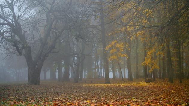 Фото: flickr.com/Daniel Jolivet