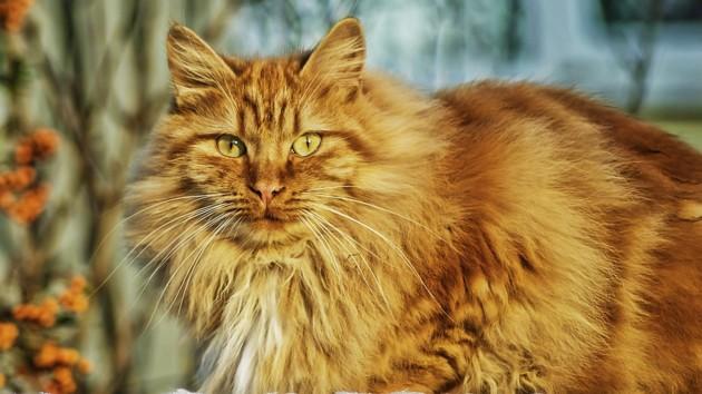 Кот после ночи с пятью кошками попал под капельницу: фото