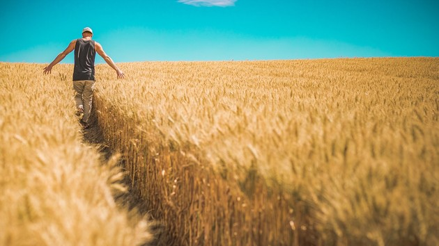 Какой урожай соберет Украина: Минэкономики назвало цифры