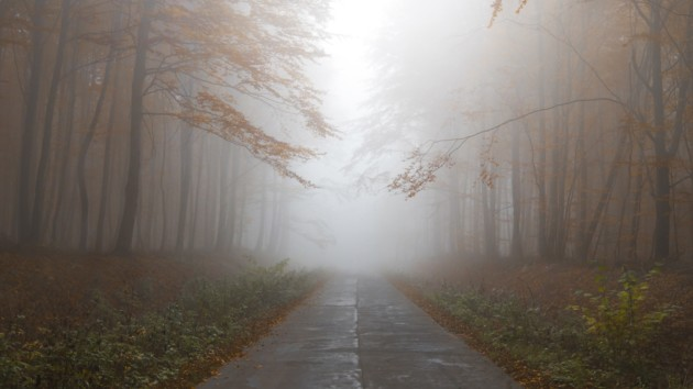Туман и до 24 ° тепла: какая погода ждет украинцев сегодня