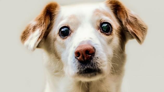 Трогательная встреча хозяйки с псом восхитила сеть: видео