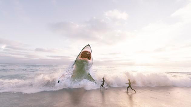 Студентка под водой натолкнулась на гигантскую акулу: видео