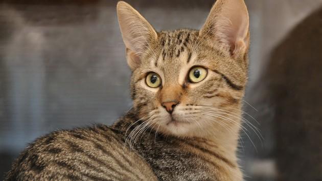 Кот попал в одиночную камеру за освобождение сородичей