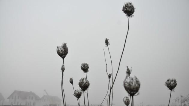 Смог в Киеве: поможет ли погода избавиться от дыма в городе
