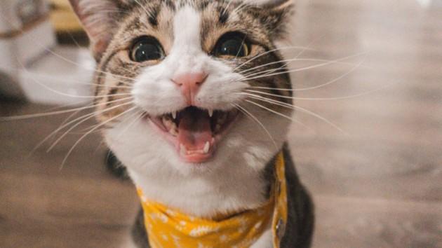 Кореєць два роки годував застряглого в стіні ТЦ кота Фото: Jae Park / Unsplash