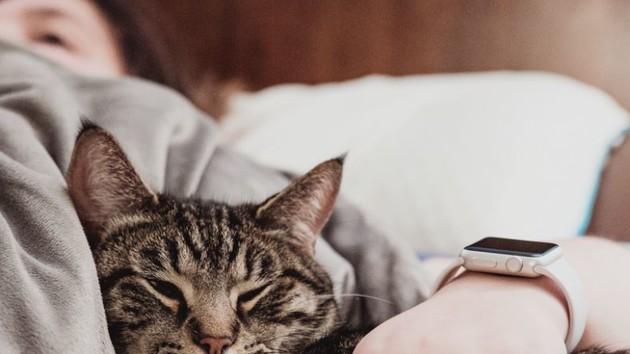 Можно ли подхватить коронавирус от кота или собаки