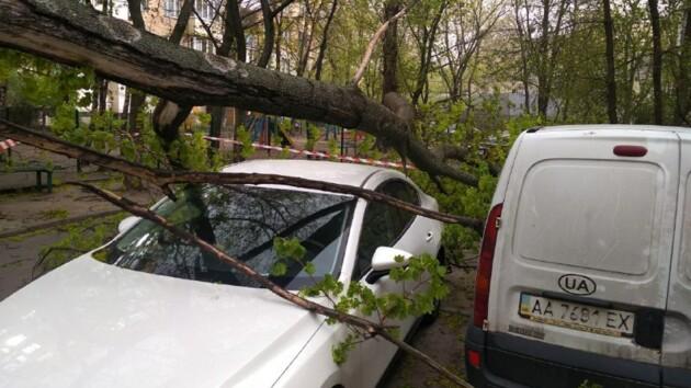 Буря в Киеве: упавшее дерево придавило автомобиль
