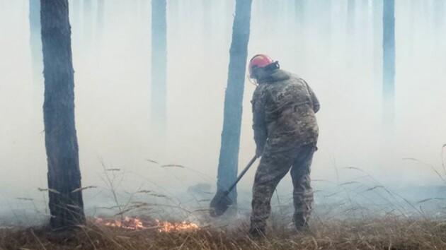 В Киеве неизвестные подожгли Голосеевский парк (фото)