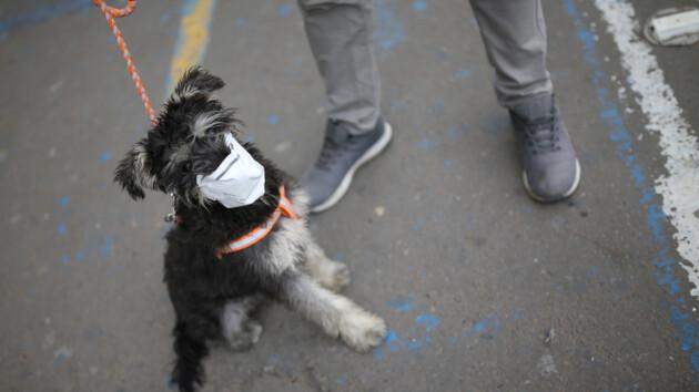 """""""Без права выгула"""": в России поместили на карантин собаку"""