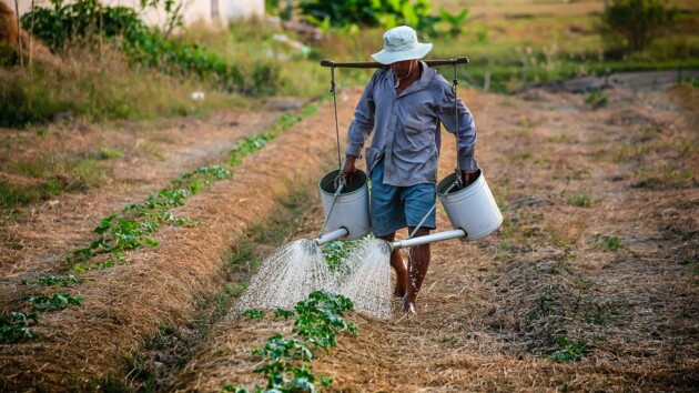 Всемирный банк проверит земельный кадастр Украины