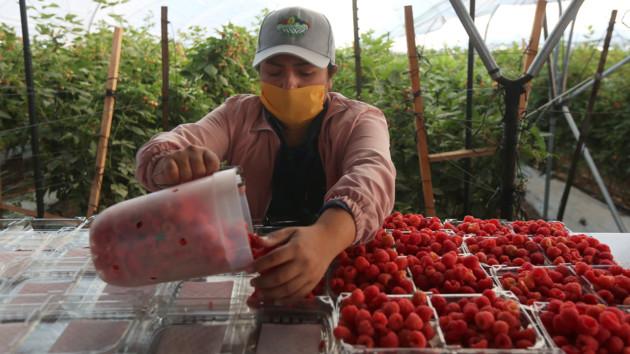 Только сельское хозяйство: заробитчанам в Польше пошли на уступки