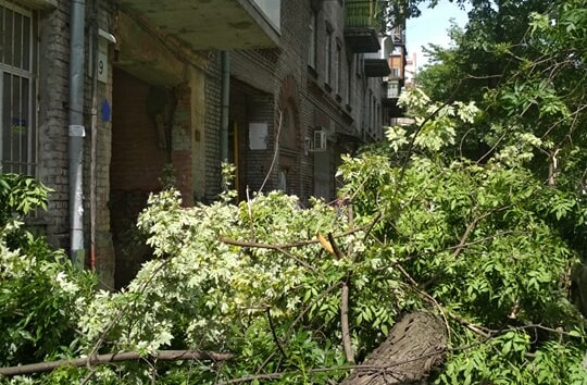 На Подоле дерево рухнуло на тротуар, едва не придавив прохожих (фото)