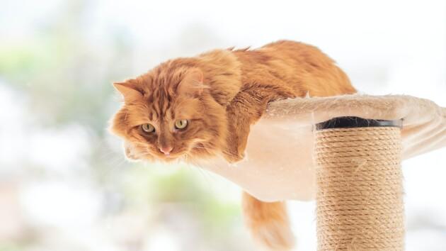 """""""Открыл для себя новый мир"""": на видео показали забавную реакцию кота на мороженое"""
